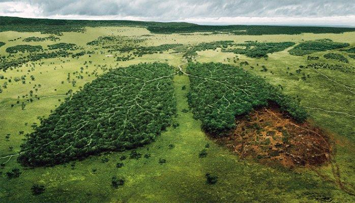 Lá phổi thiên nhiên đang dần bị hủy hoại bởi tác động của con người